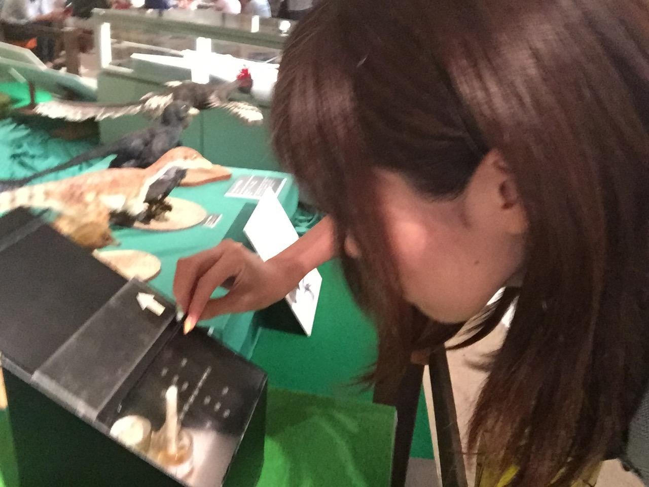 画像1: 群馬県立自然史博物館は面白い要素満載!
